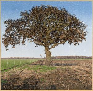 siemen dijkstra - syma news - artiste - art - pays bas - netherlands - gravure - estampe - graveur - a bois perdu - fondation custodia - florence yeremian - nature - mer - paysages - foret - arbre - landscape - voyage - drenthe - neerlandais - biodiversité - kunst - arte