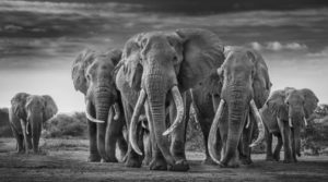 art paris - art - paris - grand palais - exposition - foire - art contemporain - symanews - florence yeremian - david yarrow - agalerie