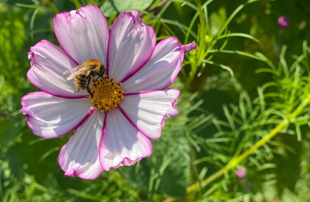 Potager du roi - louis XIV - Versailles - fleur - abeille - arbre - journee patrimoine - syma news - gopikian - yeremian florence